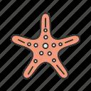 ocean, sea, shell, shells, star, starfish, summer