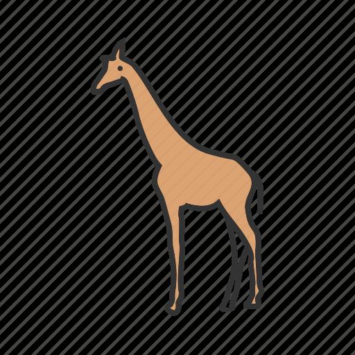 africa, animal, giraffa, giraffe, mammal, wildlife, zoo icon