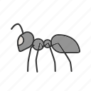 ant, beetle, bug, fly, insect, pest, termite