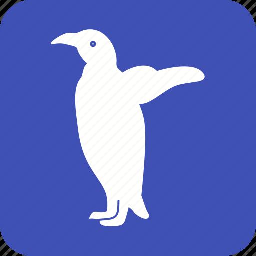 animal, bird, cute, penguin, penguins, snow, young icon