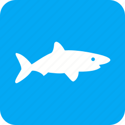blue, dive, fish, shark, sharks, whale, wildlif icon