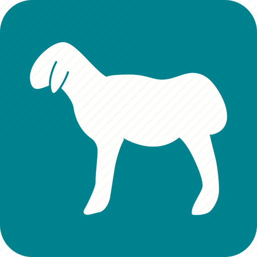 animal, domestic, farm, mammal, sheep, vertebrate, wool icon