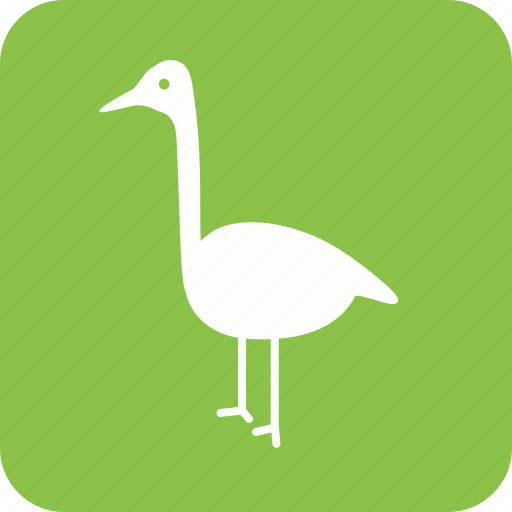animal, beautiful, bird, flamingo, flamingos, pink, summer icon