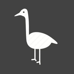 animal, beautiful, bird, flamingo, flamingos, pink, summer icon