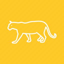 animal, carnivore, cub, mammal, predator, tiger, wild icon