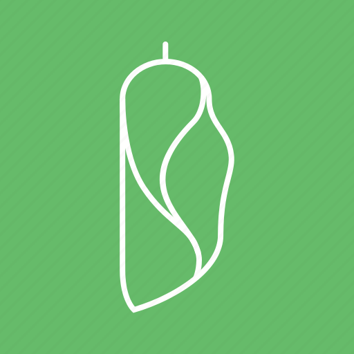 Animal, butterfly, cocoon, insect, metamorphosis, transformation icon - Download on Iconfinder