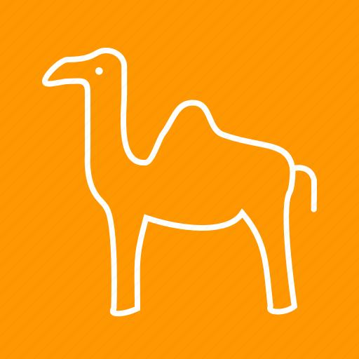 animal, camel, camels, desert, egypt, safari, sand icon