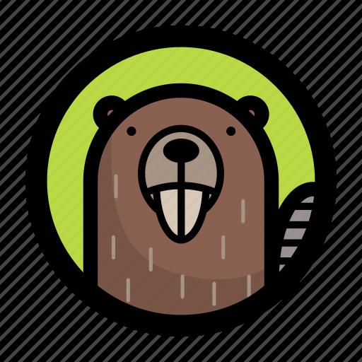 animal, beaver, face icon