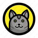 animal, cat, face, kitty, pet icon