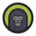 animal, face, gorilla, monkey, zoo icon
