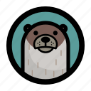 otter, wild, seal, sea, animal, face