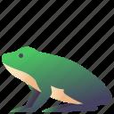 amphibian, animal, creature, frog, wild