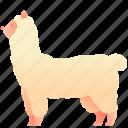 alpaca, animal, llama, mammal, pet, zoo
