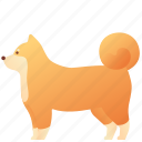 animal, dog, domestic, fluffy, furry, pet, shiba icon
