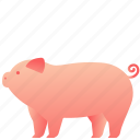 animal, domestic, farm, mammal, pet, pig