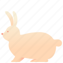 animal, bunny, domestic, pet, rabbit