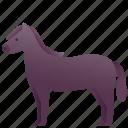 animal, domestic, farm, horse, pet, zoo