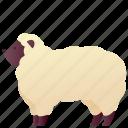 animal, domestic, farm, pet, sheep, zoo