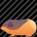 animal, cavy, domestic, gatsby, guinea pig, pet, rat icon