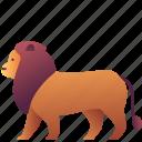 animal, creature, leader, lion, wild, zoo