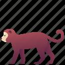 animal, chimpanzee, creature, monkey, wildlife, zoo