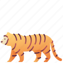 animal, creature, leader, tiger, wildlife, zoo