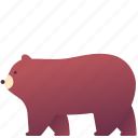 animal, bear, fluffy, grizzly, mammal, wild, zoo icon