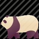 animal, bear, fluffy, mammal, panda, wild, zoo
