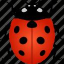 beetles, bug, coccinellidae, insect, lady, ladybird, ladybug icon
