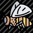 bee, insect, honey, entomology, apiary