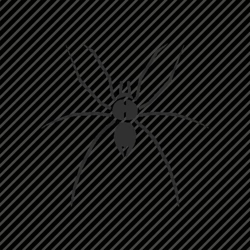 animal, arachnid, arthropod, grass spider, invertebrate, spider icon