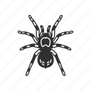 animal, arachnid, bird-eating spider, invertebrate, spider, tarantula icon