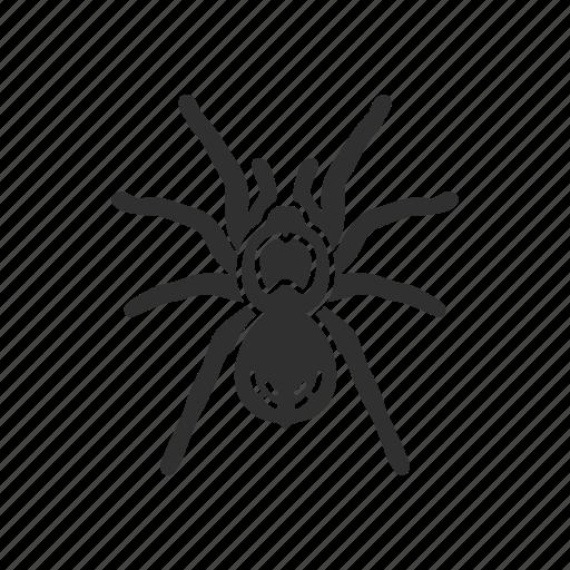 animal, arachnids, bird-eating spider, invertebrate, spider, tarantula icon