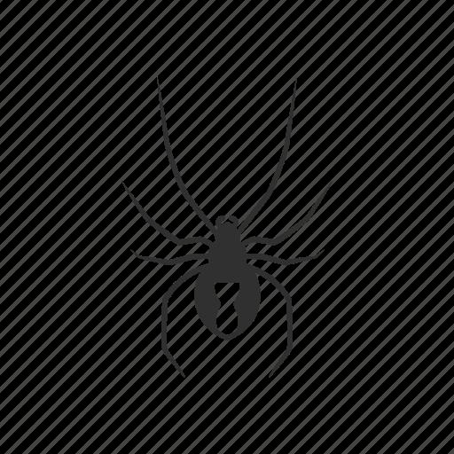 animal, arachnid, black widow, invertebrate, redback spider, small spider, spider icon
