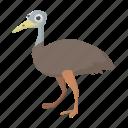 australia, australian, bird, cartoon, emu, feather, vectior icon