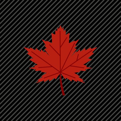 autumn, fall, leaf, maple, nature, orange, season icon