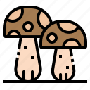 fungus, mushrooms, oyster, toadstool, vegetable