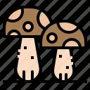 fungus, mushrooms, oyster, toadstool, vegetable icon
