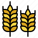 barley, branch, leaves, nature, wheat