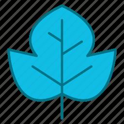 autumn, beech, fall, leaf, nature, season icon