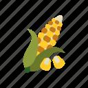 kernel, food, season, corn, autumn, vegetable, harvest
