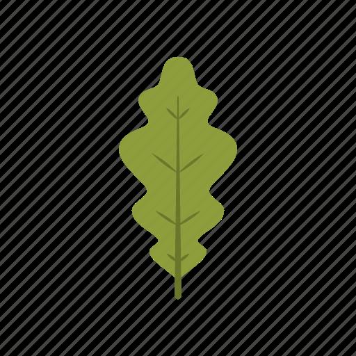 autumn, green, leaf, leave, nature, season, white oak icon