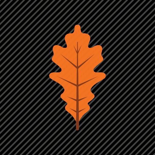 autumn, leaf, leave, nature, oak, orange, season icon