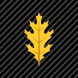 autumn, leaf, leave, nature, oak, season, yellow icon