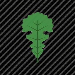 autumn, green, leaf, leave, nature, oak, season icon