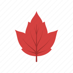 autumn, canada, leaf, leave, nature, red maple, season icon