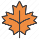 autumn, brown, fall, leaf, leaves, mapple, plant icon