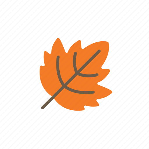 autumn, fall, leaf icon