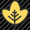 autumn, leaf, nature, plant, tree icon