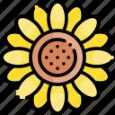 sunflower, flower, petal, blossom